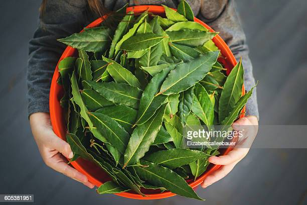 overhead view of girl holding bowl of bay leaves