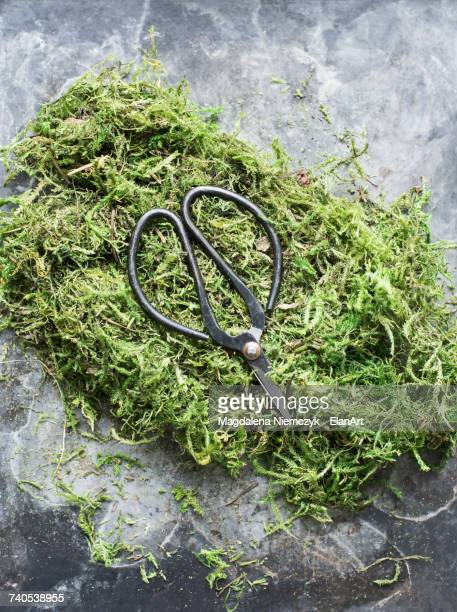 Overhead view of scissors on moss