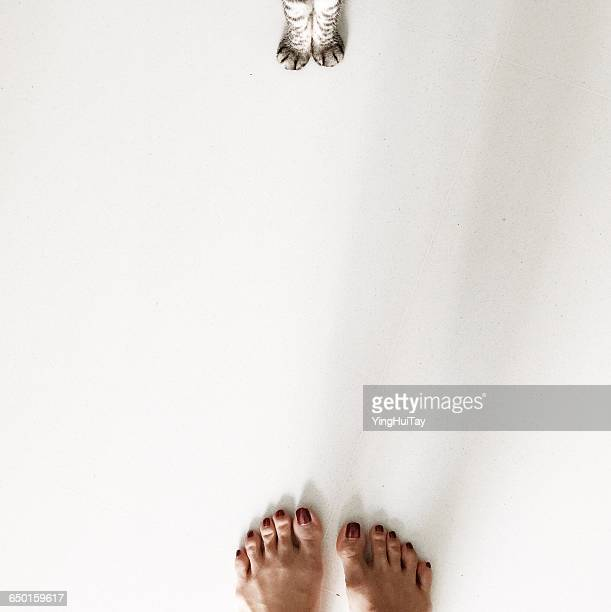 Overhead view of woman's feet and american shorthair cat paws
