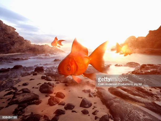Oversized goldfish floating over beach