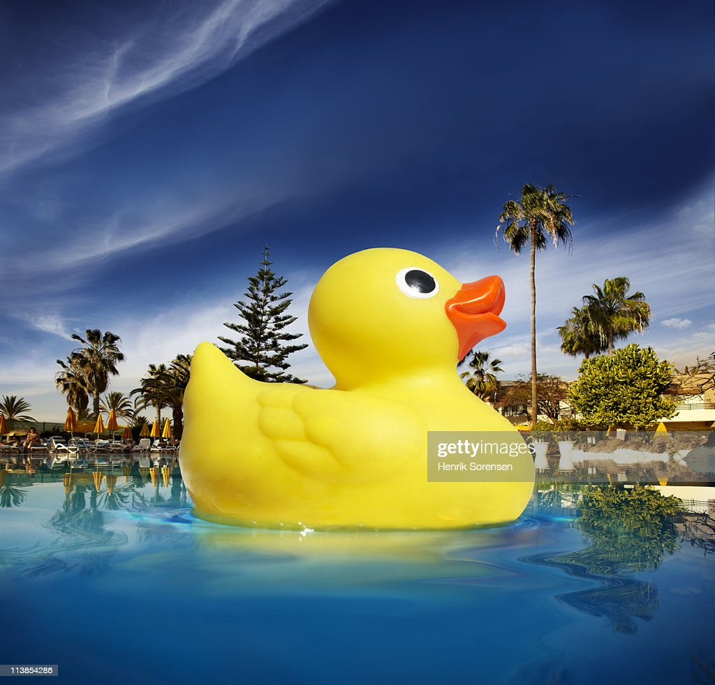 Oversized yellow plastic duck floating in a pool : Stock Photo