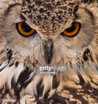 Owl face closeup.