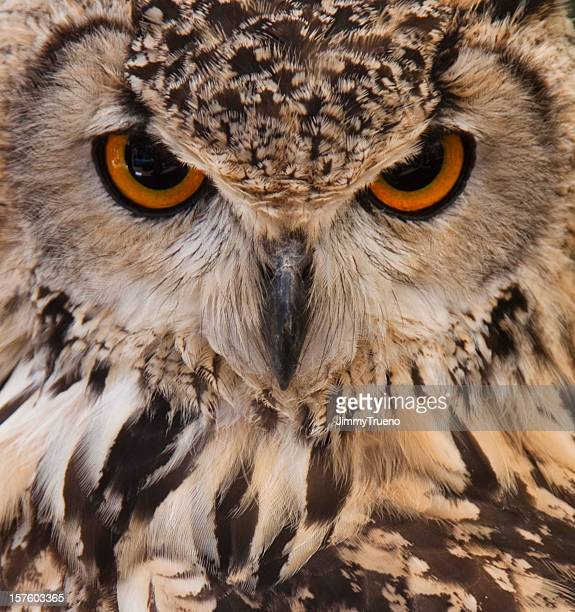 Owl face closeup.