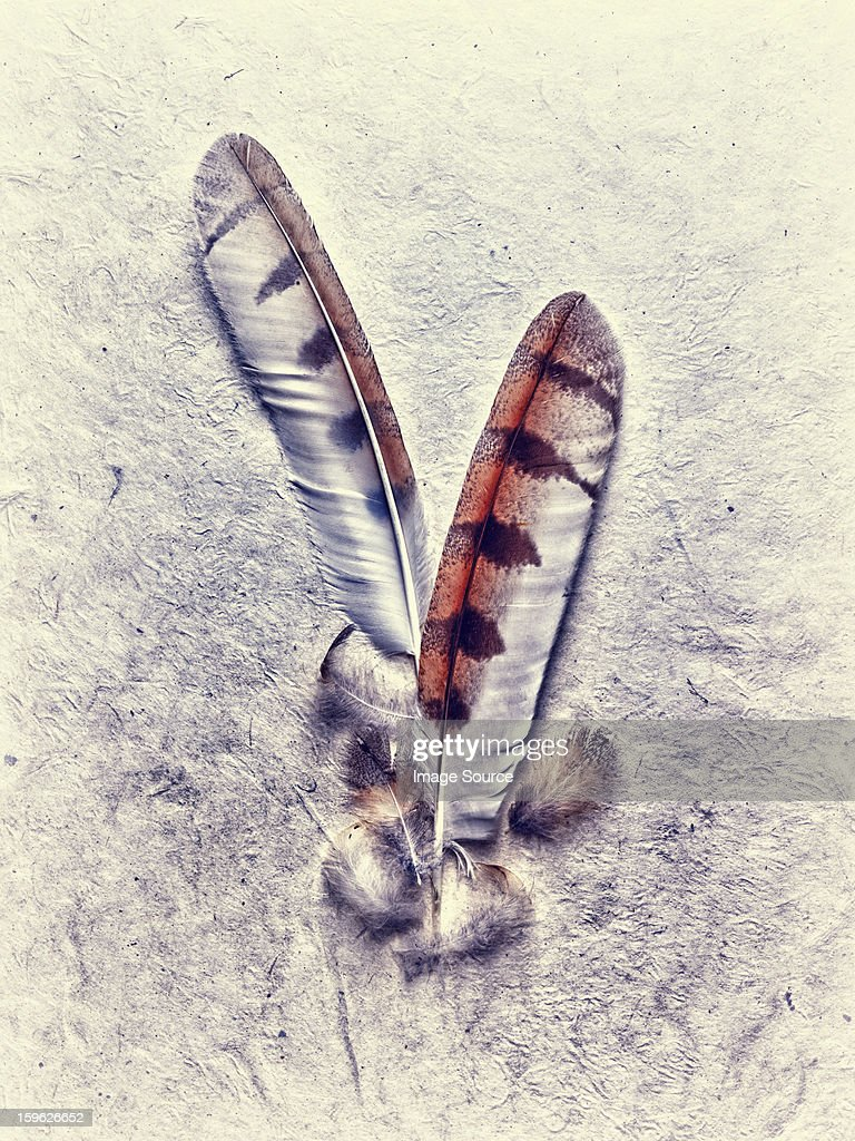 Owl feathers : Stock Photo