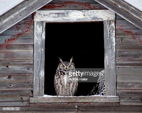 Owl framed in a window