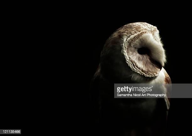 Owl in dark