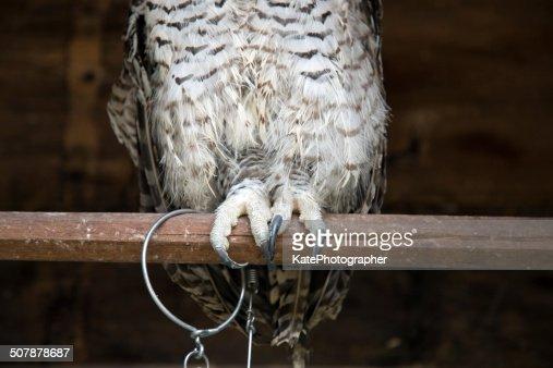 Single treffen owl item id