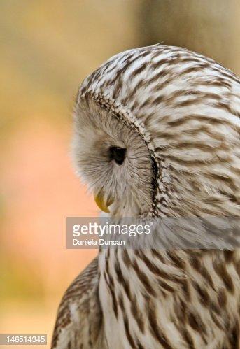 Owl looking down