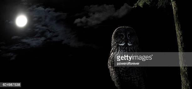 Owl perched in tree at night under a full moon