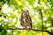 Owl sitting on the branch in the sunny forest.