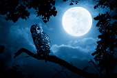 A quiet night, a bright moon rising over the clouds illuminates the darkness, and a Barred Owl sits motionless in the blue moonlight. slight diffuse glow added to enhance scene. All my own components.