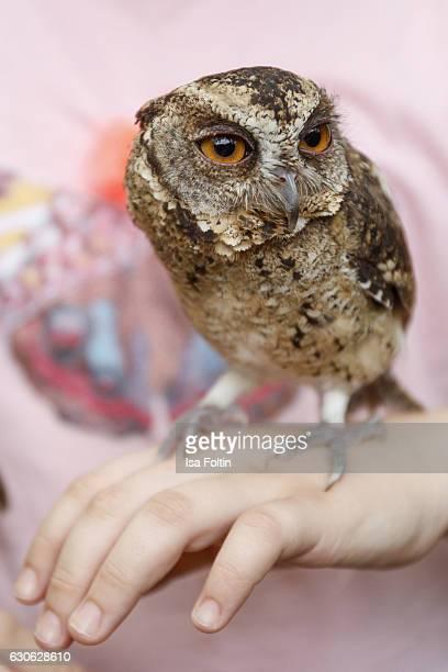 KARANGASEM BALI INDONESIA DECEMBER 23 A owlet on the hand of a tourist child at the Taman Tirta Gangga Water Palace on December 23 2016 in Karangasem...