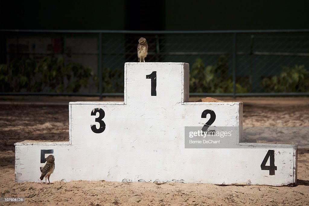 Owls on winner podium