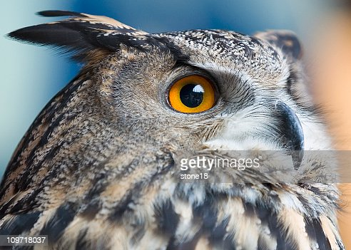 Owls see everything