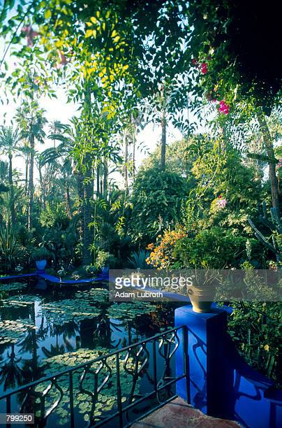 Owned by Yves Saint Laurent the tranquil Jardin Majorelle is opened to the public where one can wander amid towering palms rare cacti and lily ponds...