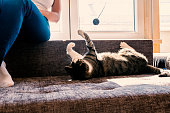 happy young woman playing with cat. Girl with her cat. Owner playing with cute funny cat at home, closeup