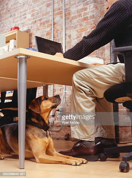 Owner with dog sitting at office, low angle view