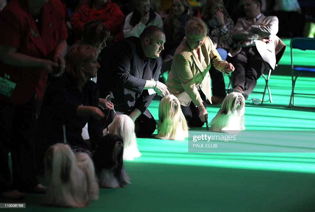 Owners hold their Lhasa Apso dogs during judging on the final day of the annual Crufts dog show at the National Exhibition Centre in Birmingham, central England, on March 13, 2011. The annual event sees dog breeders from around the world compete in a number of competitions with one dog going on to win the 'Best in Show' category.
