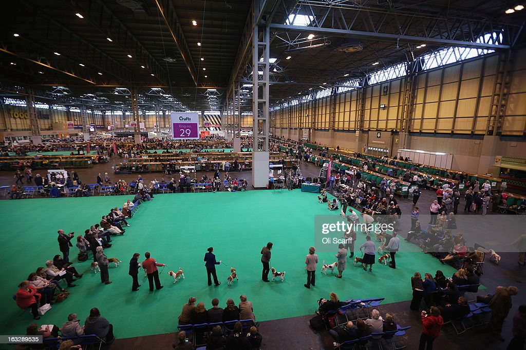 Owners show their dogs on the first day of Crufts dog show at the NEC on March 7, 2013 in Birmingham, England. The four-day show features over 25,000 dogs, with competitors travelling from 41 countries to take part. Crufts, which was first held in1891, sees thousands of dogs vie for the coveted title of 'Best in Show'.