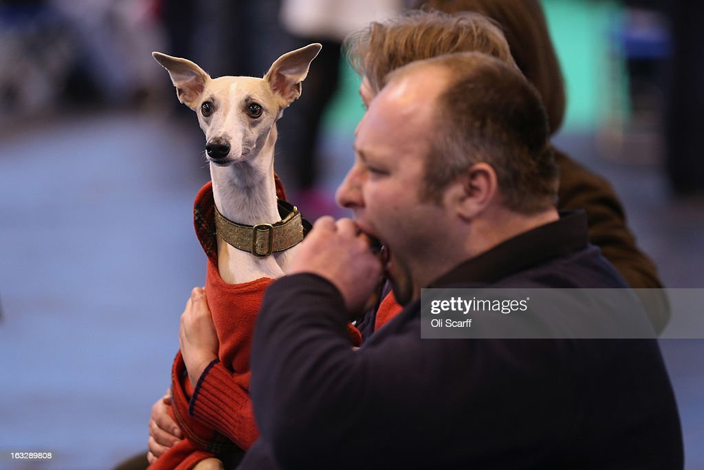 Owners watch dogs being shown on the first day of Crufts dog show at the NEC on March 7, 2013 in Birmingham, England. The four-day show features over 25,000 dogs, with competitors travelling from 41 countries to take part. Crufts, which was first held in1891, sees thousands of dogs vie for the coveted title of 'Best in Show'.