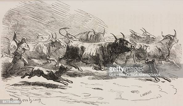 Oxen at the market in Poissy engraving by Marais based on a drawing by Rosa Bonheur from ParisGuide by leading writers and artists of France Volume 2...