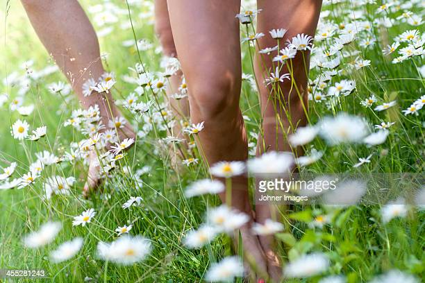 Ox-eye daisies and human feet, close-up