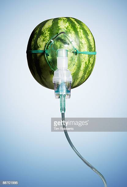 Oxygen mask attached to a water melon