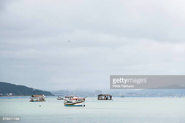 oyster farming in southern Brazil