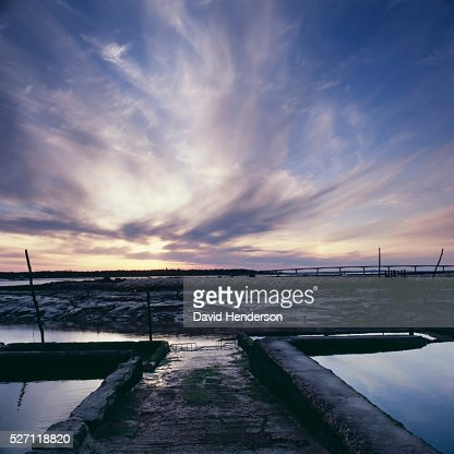 Oyster farming : Stock Photo