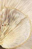 Close-up of oyster mushroom gills texture as background.