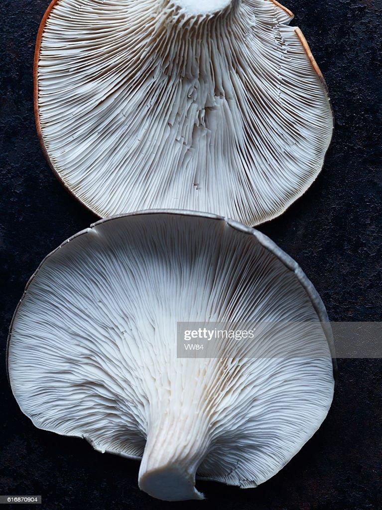 Oyster Mushrooms : Stock Photo