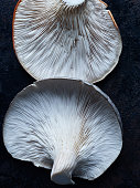 Two Oyster Mushrooms upside down showing off their shape and gills or lamella lying on a dark metal background.