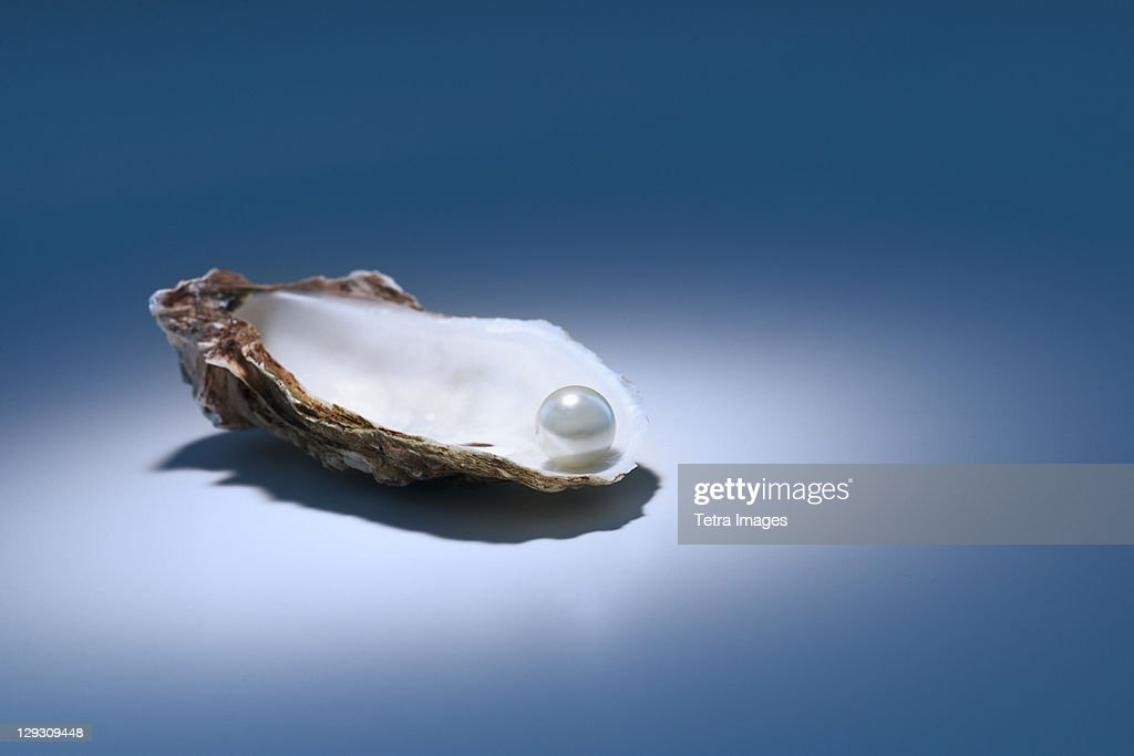 Oyster pearl on gray background