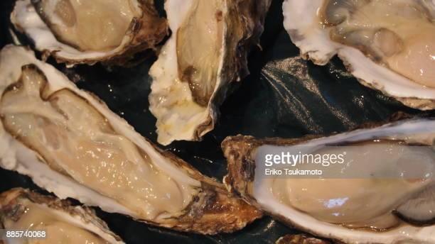 Oyster - Tsukiji Market