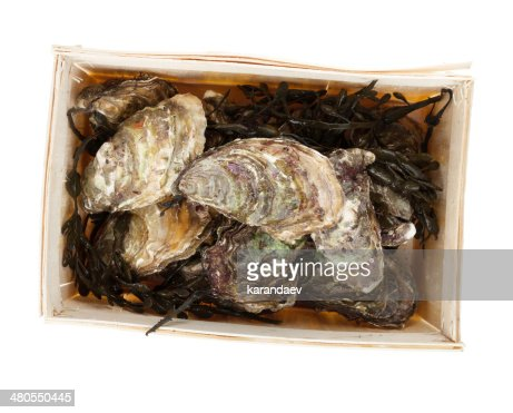Oysters box : Stock Photo