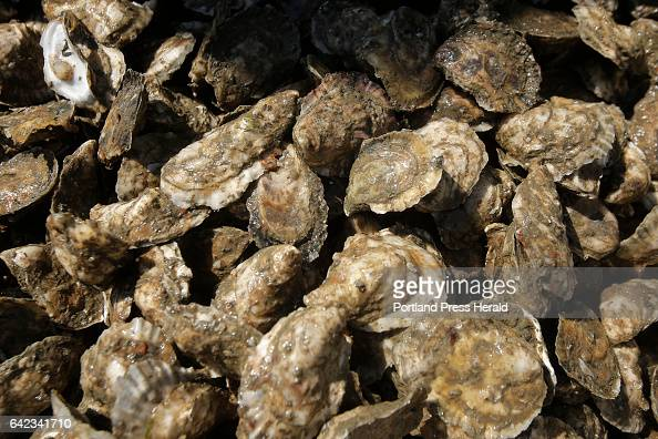 Oysters harvested by Mark Green and his crew off the coast of Yarmouth wait to be rinsed aboard a raft Green operates as part of his business Basket...