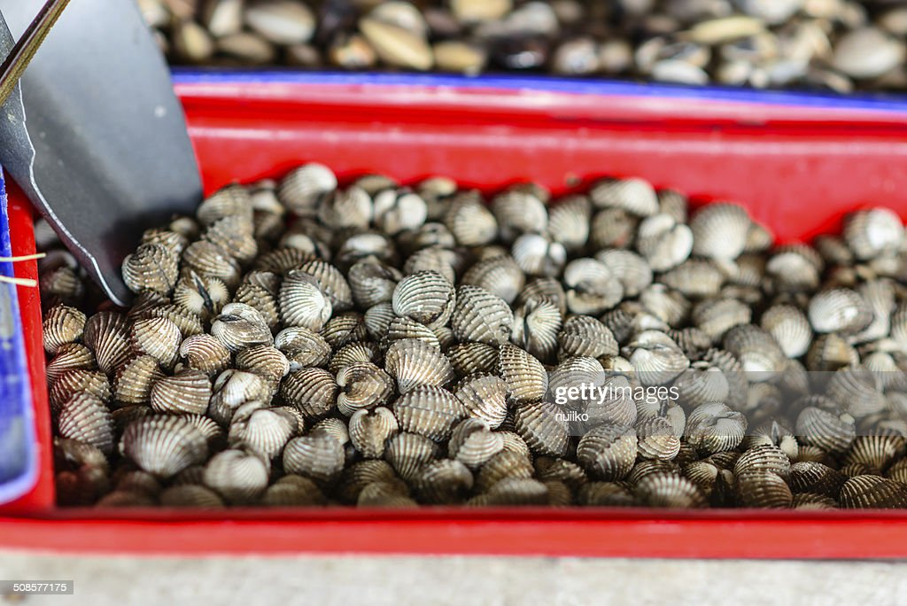 Oysters, mussels and scallops on asian market : Stock Photo