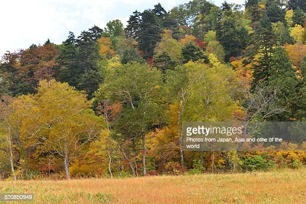 Ozegahara (Oze Marshland) in Autumn