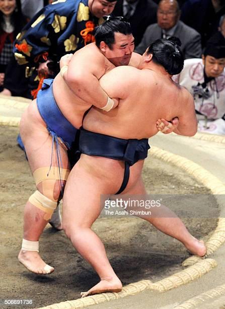 Ozeki Kotoshogiku and ozeki Goeido compete during day fifteen of the Grand Sumo New Year Tournament at Ryogoku Kokugikan on January 24 2016 in Tokyo...