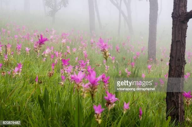 Pa Hin Ngam National Park,Flowers