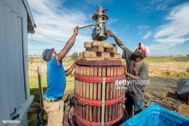 Paarl South Africa Wine makers mashing wine grapes