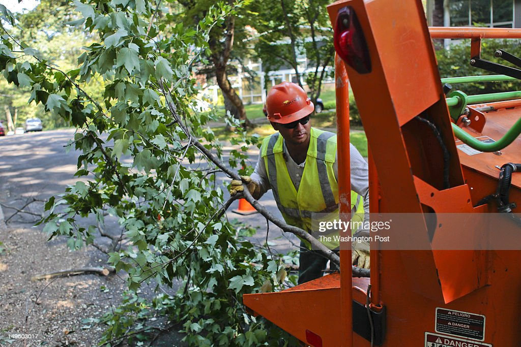 Pablo Reyes, from Nicaragua and a Asplundh employee, pushes branches into a wood chipper as the Rock Creek Woods neighborhood residents are raging with furor after Asplundh Tree Expert Co., contracted by Pepco, swooped into their cozy neighborhood and turned their 50-year-old cherry trees into slingshots with 'aggressive pruning' to prevent future downed wires in Silver Spring, MD on Wednesday July 18, 2012.