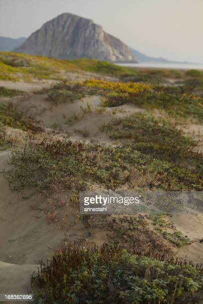 Pacific Coast Dunes - Morro Bay