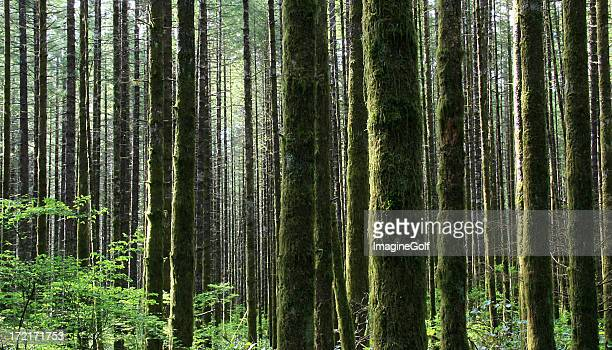 Pacific Northwest Rainforest in Washington State