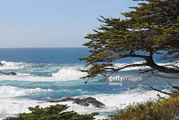 Pacific Ocean from Point Lobos, California