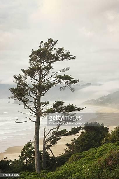 Pacific Ocean Northwest Coast Tree