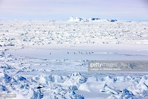 Pack ice, penguins, Weddell Sea, Antarctica