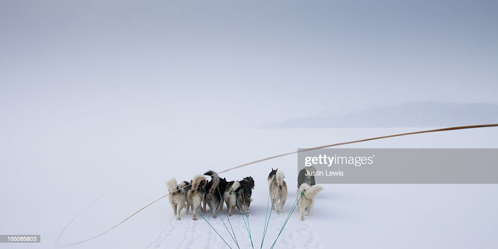 Pack of arctic dogs pulling sled with whip in snow : Stock Photo