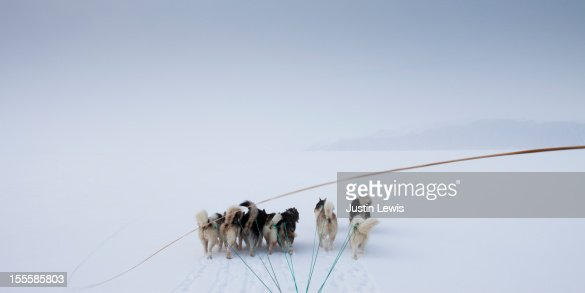 Pack of arctic dogs pulling sled with whip in snow : Photo