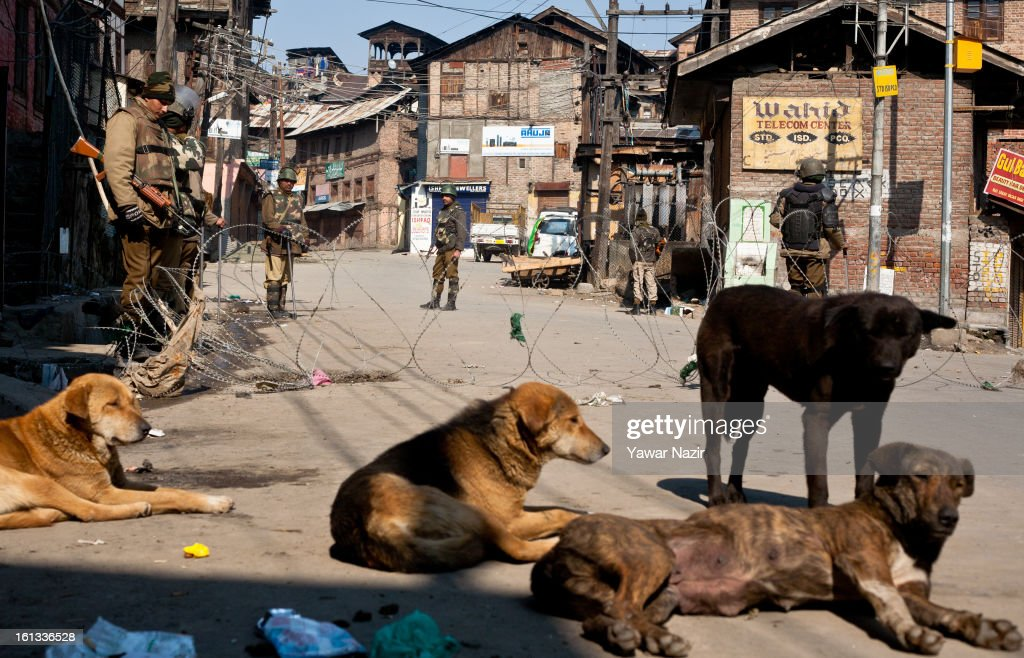 A pack of dogs rest on a main road as Indian paramilitary soldiers and policemen stand guard during a curfew on the second consecutive day after the execution of Indian parliament convict Mohammad Afzal Guru on February 10, 2013 in Srinagar, the summer capital of Indian Administered Kashmir, India. Afzal Guru, from Sopore town in the north of Kashmir, was hung yesterday for his role in the 2001 Indian parliament attack which left 14 dead.